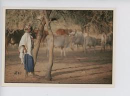 "Afrique ""berger"" Wakhatilene Boyer Photofraphe - Gardien De Troupeu - Vache - Other"