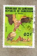 CAMEROUN : Oiseau : Vautour - Rapace Diurne - Nécrophage - - Cameroon (1960-...)