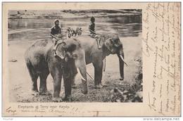 R24- SRI LANKA - ELEPHANTS AT TERRY NEAR KANDY  - (ANIMÉE - ÉLÉPHANT - OBLITERATION DE 1903 - 2 SCANS - Sri Lanka (Ceylon)