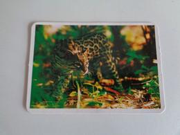 Ocelote Portugal Portuguese Pocket Calendar 1996 - Small : 1991-00