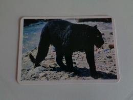 Pantera Negra Portugal Portuguese Pocket Calendar 1996 - Small : 1991-00