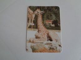 Girafa Portugal Portuguese Pocket Calendar 2000 - Small : 1991-00