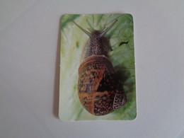 Caracol Portugal Portuguese Pocket Calendar 2000 - Small : 1991-00