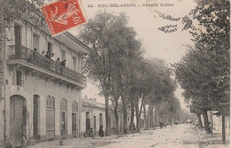 V8- SIDI BEL ABBES (ALGERIE) AVENUE KLEBER - Sidi-bel-Abbès