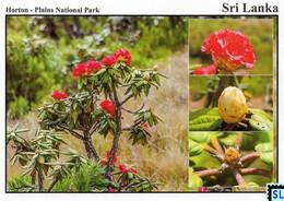 Sri Lanka Postcards, Ma Rathmal, Flowers, Horton Plains National Park, UNESCO, Postcrossing - Sri Lanka (Ceylon)