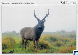 Sri Lanka Postcards, Sambur Deer, Horton Plains National Park, UNESCO, Postcrossing - Sri Lanka (Ceylon)