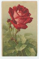 FLOWERS, Fleurs , By CATHARINA KLEIN - Meissner & Buch Serie 1671  ( 2 Scans ) - Klein, Catharina