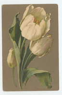 FLOWERS, Fleurs , By CATHARINA KLEIN - Meissner & Buch Serie 1886  ( 2 Scans ) - Klein, Catharina