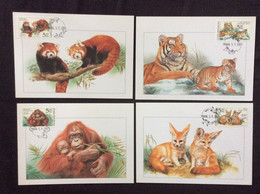 4 Cartes Maximum Animaux De Zoo Petit Panda Fennec Tigre Orang Outan - FDC