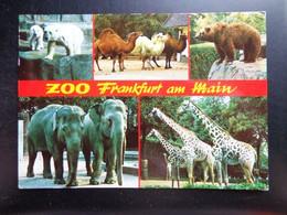 Zoo, Dierenpark, Tierpark / Zoo Frankfurt Am Main -> Beschreven - Otros