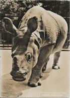 RHINOCEROS - Rinoceronte