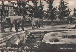 Elefanti  Indiani. Giardino Zoologico Di Torino. Non Viaggiata - Sin Clasificación
