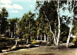 60 - Ermenonville - Clairière En Forêt - Ermenonville