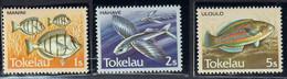 TOKELAU - Faune, Poissons Du Pacifique, Série Courante - MNH - 1984 - Tokelau