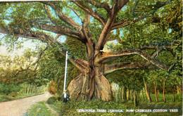 JAMAÏQUE. Carte Postale Neuve. Tom Cringles Cotton Tree. - Jamaica