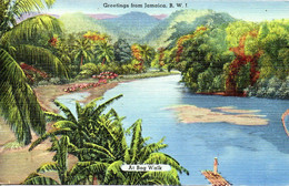 JAMAÏQUE. Carte Postale Neuve. At Bog Walk. - Jamaica