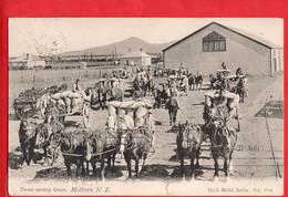NEW ZEALAND   METHVEN   HORSE TEAMS CARTING GRAIN   Pu 1904 - New Zealand