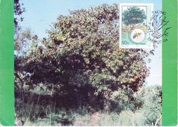 BOPHUTHATSWANA : MAX CARD : YEAR 1985 ; TREE CONSERVATION - Bophuthatswana