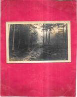 PHOTOGRAPHE D'art Georges HUSS à SAINT DIE - Sous Bois Dans Les VOSGES - DELC1 - - Photographs