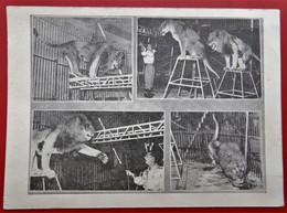 Cpa  GEORGIO Junior Et Ses Fauves - Zirkus