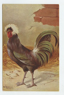 Illustrateur, Art Sign Pc. - Rooster , Le Coq  ( 2 Scans ) - Other Illustrators