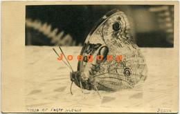 Photo Postcard Butterfly Mariposa 1938 Porto Alegre Brasil To Rafaela Santa Fe Argentina - Butterflies