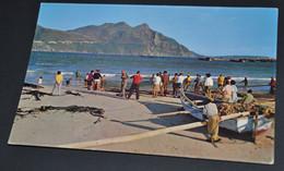 Trek Fishing At Hout Bay, Cape - Afrique Du Sud