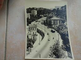 Grande Photo Ancienne ALGERIE ALGER Vue D'une Rue - Années 50 - Places