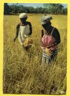 La Récolte Du Riz- Timbres SENEGAL - Plan D'urgence De L' Hydraulique .eau Water, Irrigation - Senegal