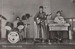HAMONT - 1972- THE DANDELIONS - Hamont-Achel