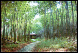 China Bamboo Grove Postcard /Bambushain Postkarte - China