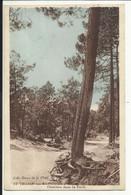 SAINT TROJAN Les BAINS , Ile D'Oléron ( Charente Inférieure ) , Clairière Dans La Forêt - Other Municipalities