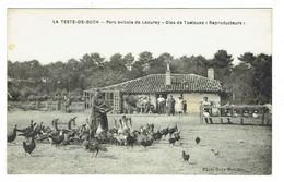 33 GIRONDE LA TESTE DE BUCH Parc Avicole De Laourey Oies De Toulouse Reproducteurs Plan Peu Courant - Autres Communes