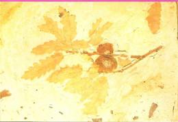 07 ARDECHE Musée Paléontologique De La Voulte Rameau De Chêne Avec Fructifications Du Miocène Supérieur - La Voulte-sur-Rhône