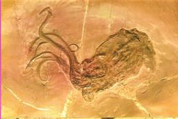 07 ARDECHE Musée Paléontologique De La Voulte Proteroctopus Ribeti Plus Ancienne Pieuvre Connue Jurassique Moyen - La Voulte-sur-Rhône