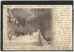 48156 . MENDE . ALLEE PIENCOURT .1904 - Mende