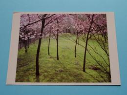 KERSELAARS : Foto Katrien Vermeire 2009 ( Zie Foto's ) Woon- En Zorghuis Ten Kerselaere HEIST-op-den-BERG ! - Fotografia