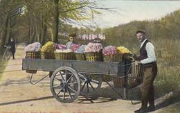 2604122In De Buurt Van Haarlem, In Het Bollenland (Kar Vol Bloemenmanden)(poststempel 1907) - Haarlem