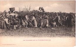 FR66 PERPIGNAN - Labouche - Les Vendanges - Animée - Altri Comuni