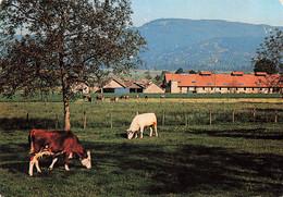 73 Champagneux Paturages Paturage Vache Laitiere Vaches - Andere Gemeenten
