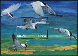 Bloc Sheet Oiseaux Sternes Birds Seagulls Neuf  MNH **  Ghana 1995 - Other
