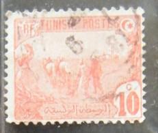MZ109  -1906 - TUNISIA 1 VALORE USATO 10C  - MOTIVI POPOLARI - Used Stamps
