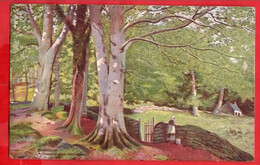 MERIONETHSHIRE   BARMOUTH   THROUGH THE WOODS BONT DHU RAPHAEL TUCK BARMOUTH SERIES   Pu 1906 - Merionethshire
