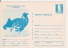 BIRD BIRDS COCK  ROMANIA STATIONERY 1977 - Cuckoos & Turacos