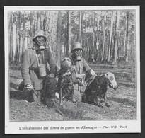 1928  --  L ENTRAINEMENT DES CHIENS DE GUERRE EN ALLEMAGNE . 3V413 - Sin Clasificación