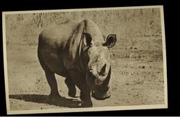 KHARTOUM ZOO ( SUDAN )  WHITE RHINICEROS  -  VINTAGE POSTCARD - Rhinoceros