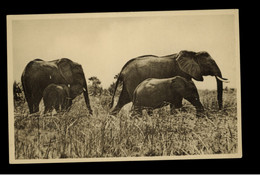 KHARTOUM ZOO ( SUDAN )  ELEPHANTS WITH YOUNG  -  VINTAGE POSTCARD - Elephants