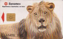 Télécarte Puce MEXIQUE - ANIMAL - Félin LION - MEXICO Chip Phonecard / Banamex  - 551 - Mexico
