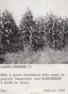 Saint-Pé-de-Léren 64 - Prairie Temporaire Maïs - Exploitation Ferme De M. Bordenave - Photographie 1958 - Autres Communes