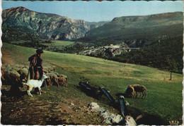CPM Gorges Du Verdon - Le Pont De L'Artuby - Grand Canon - Shepherd (1113331) - Autres Communes